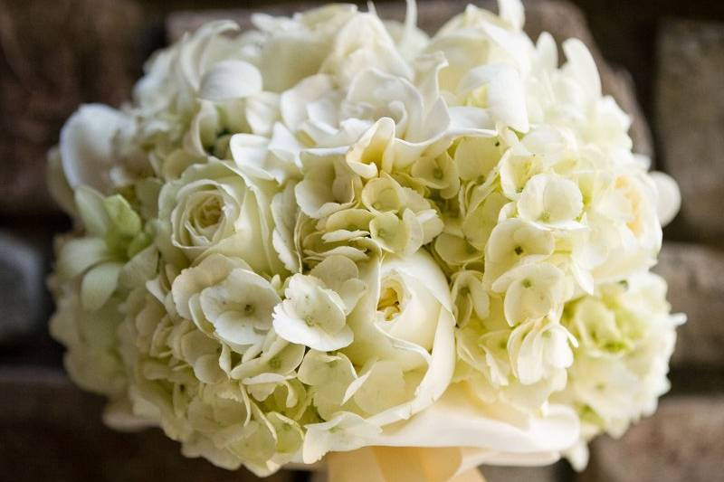 Brassavolas Floral Couture