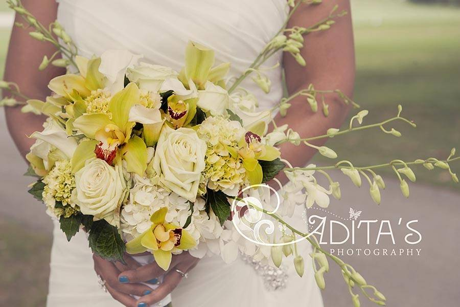 Adita's Photography