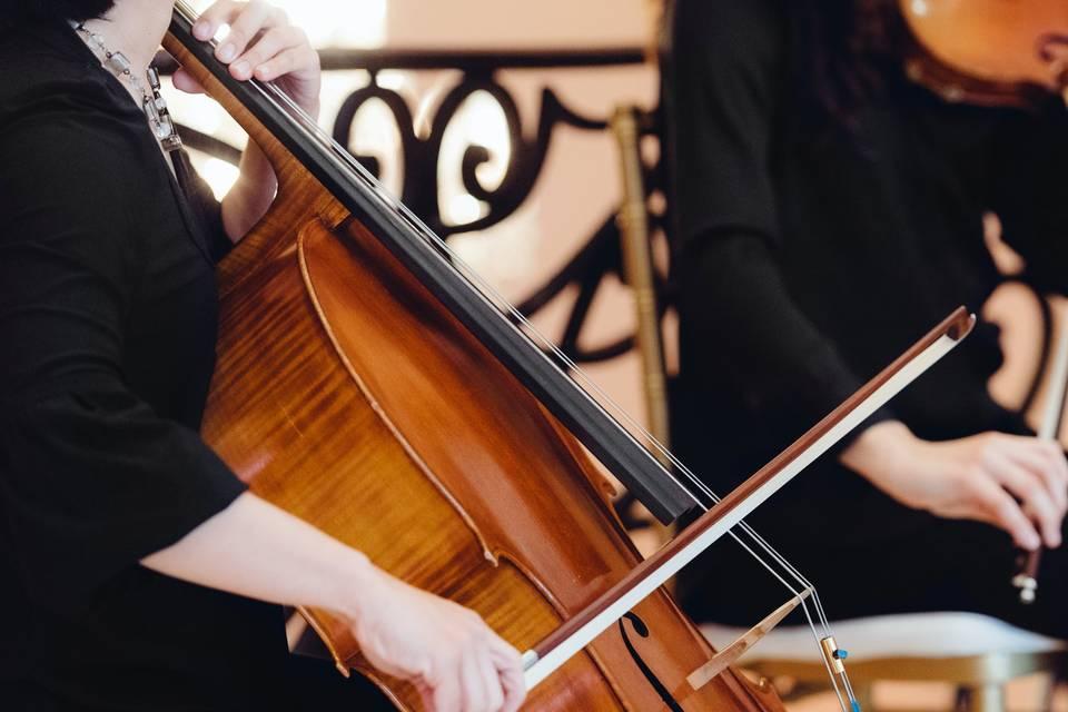 Harmony Strings